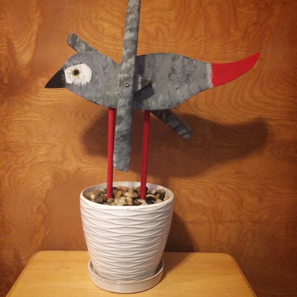 African Grey Whirligig