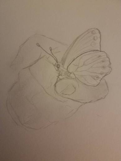 Butterfly drawing 3