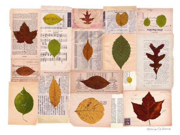 Collected Leaves