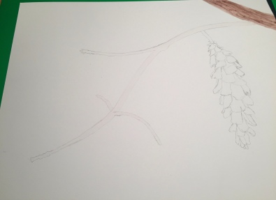 Pinecone outline in pencil