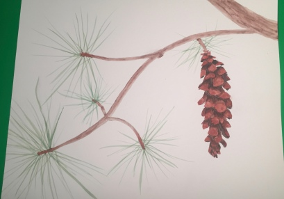 Pinecone water color illustration