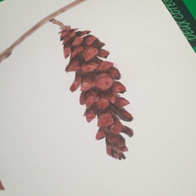 painted pinecone illustration