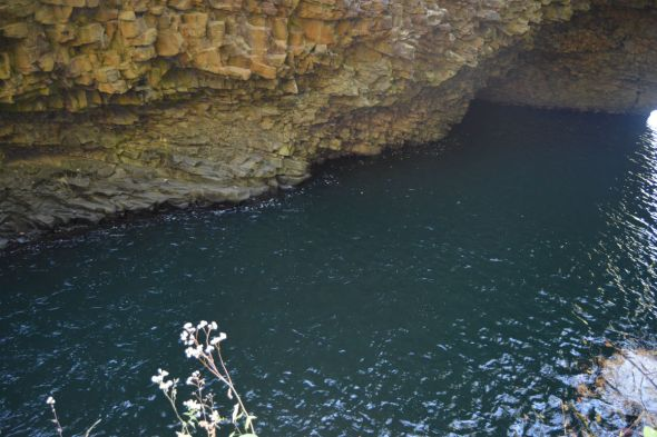 cliff over a river with flowers poking out