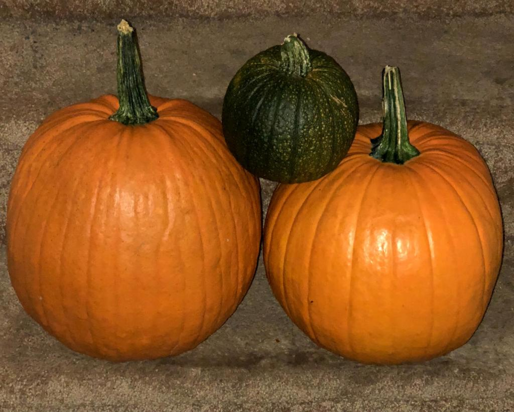 Pumpkins From Patch
