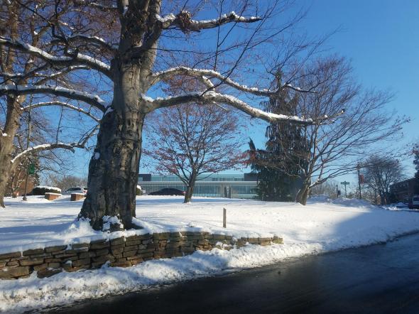 Snowy Marywood