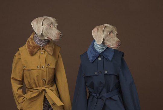 Looking Right by William Wegman