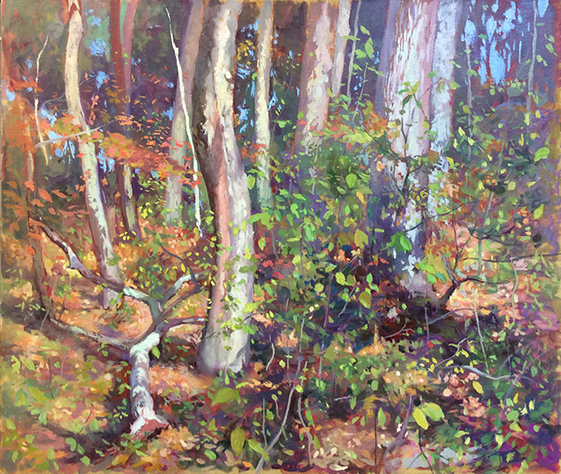 Woods: Early Fall
