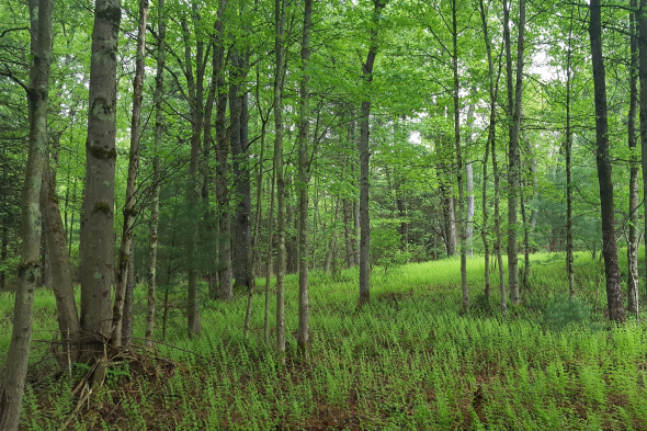 A photo of the woods in Bethel New York